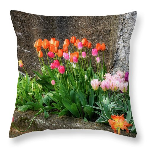 Flowers As Art Throw Pillow featuring the photograph Beauty In Ruins by Michael Hubley