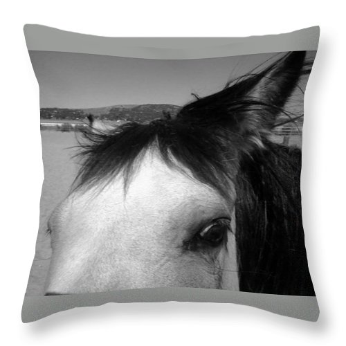Horse Throw Pillow featuring the photograph Beauty Is In The Eye... by Jamey Balester