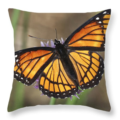 Throw Pillow featuring the photograph Beauty With Wings by Deborah Benoit