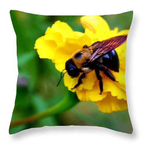 Marigold Throw Pillow featuring the photograph Bee And Marigold by Patricia Motley