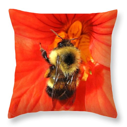 Bee Throw Pillow featuring the photograph Bee And Nasturtium by Will Borden