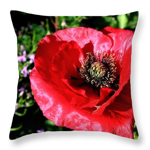 Bee Throw Pillow featuring the photograph Bee And Red Poppy by Will Borden