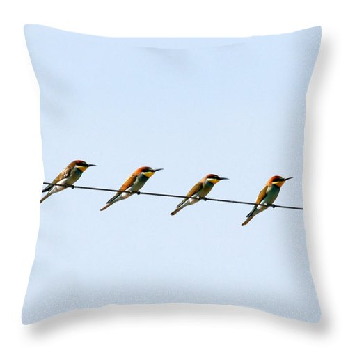 Bee Eaters Throw Pillow featuring the photograph Bee Eaters On A Witre by Cliff Norton