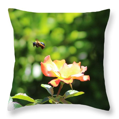 Bee Flying From Peach Petal Rose Throw Pillow
