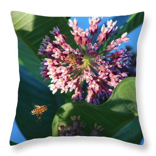 Bee Flying To Milkweed In Elgin Illinois Throw Pillow