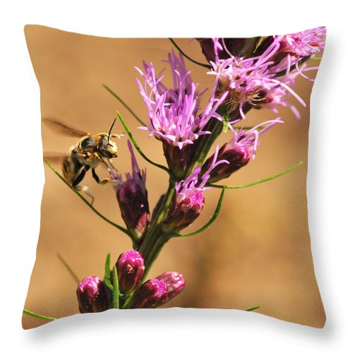 Bee Throw Pillow featuring the photograph Bee In Flight by Michelle DiGuardi