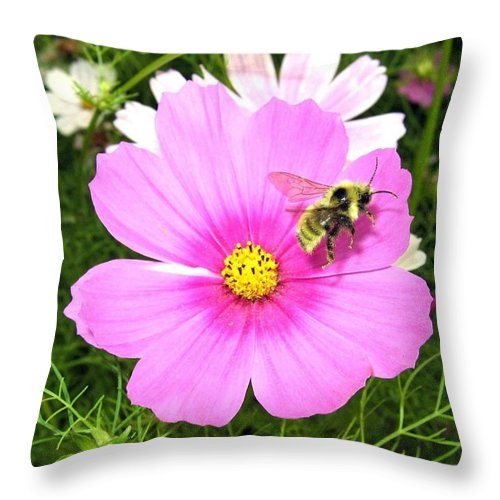 Bee Throw Pillow featuring the photograph Bee-line 6 by Will Borden