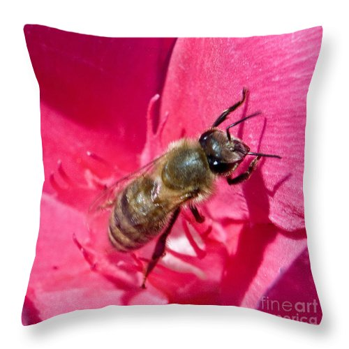 California Scenes Throw Pillow featuring the photograph Bee Mine by Norman Andrus