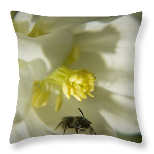 Columbine Throw Pillow featuring the photograph Bee Mine by Teresa Mucha