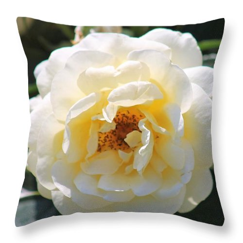 Flowers Throw Pillow featuring the photograph Bee My Rose by James Haney