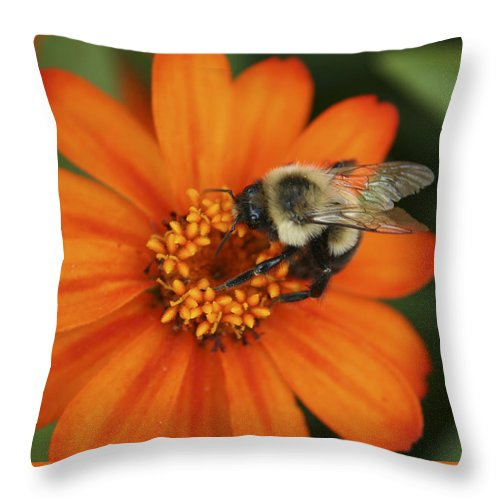 Bee Throw Pillow featuring the photograph Bee On Aster by Margie Wildblood
