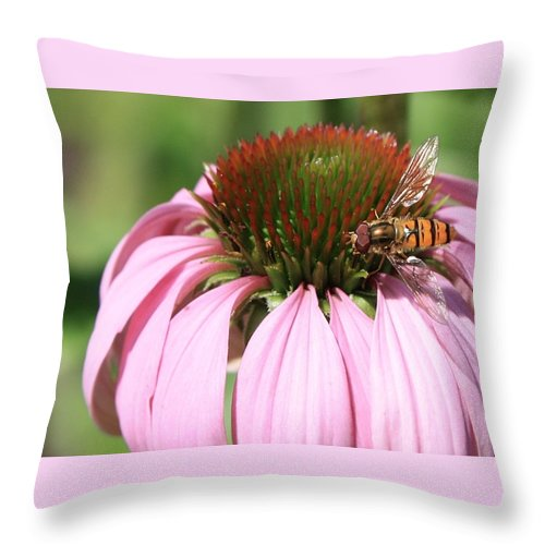 Echinacea Throw Pillow featuring the photograph Bee On Echinacea by Carol Groenen
