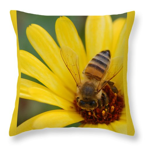 Bee Throw Pillow featuring the photograph Bee On Flower by Amy Fose