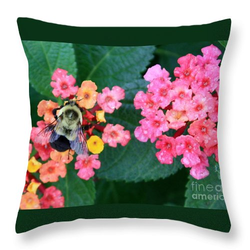 Bee Throw Pillow featuring the photograph Bee On Rainy Flowers by Carol Groenen