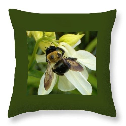 Bee Throw Pillow featuring the photograph Bee On White by Sara Raber
