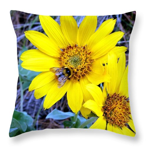 Bee On Wild Sunflowers Throw Pillow featuring the photograph Bee On Wild Sunflowers by Will Borden
