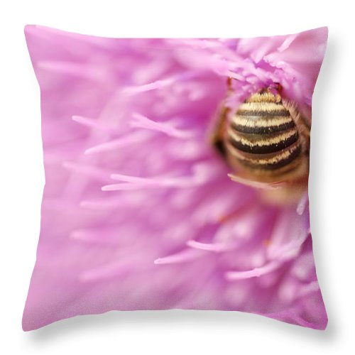 Bee Throw Pillow featuring the photograph Bee The Moon by Graham Elliott