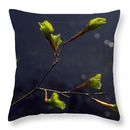 Green Throw Pillow featuring the photograph Beech Buds by Michael Mogensen