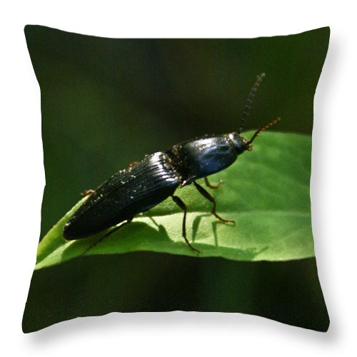 Beetle Throw Pillow featuring the photograph Beetle At Sunrise by Douglas Barnett