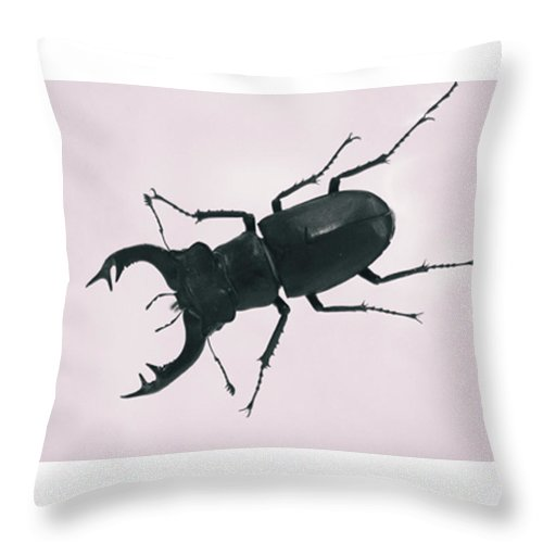 Insect Throw Pillow featuring the photograph Beetle by Martin Newman