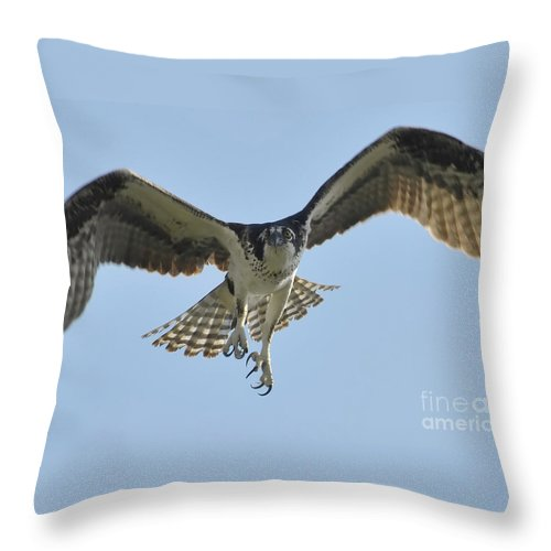 Osprey Throw Pillow featuring the photograph Before The Catch by David Lee Thompson