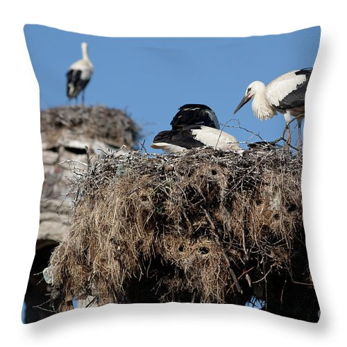 White Stork Throw Pillow featuring the photograph Before The First Flight by Kamen Ruskov