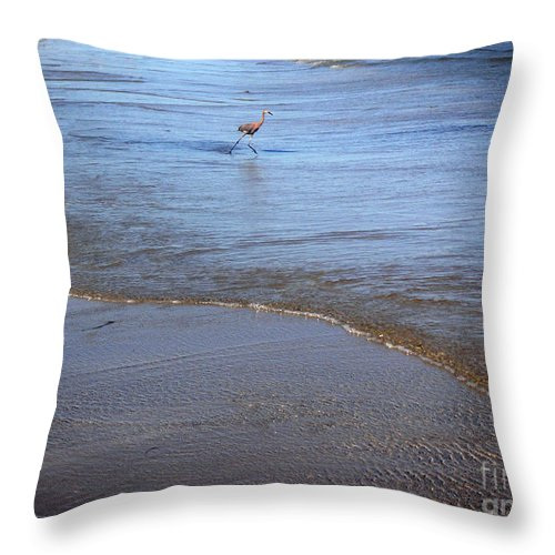 Nature Throw Pillow featuring the photograph Being One With The Gulf - Playing by Lucyna A M Green