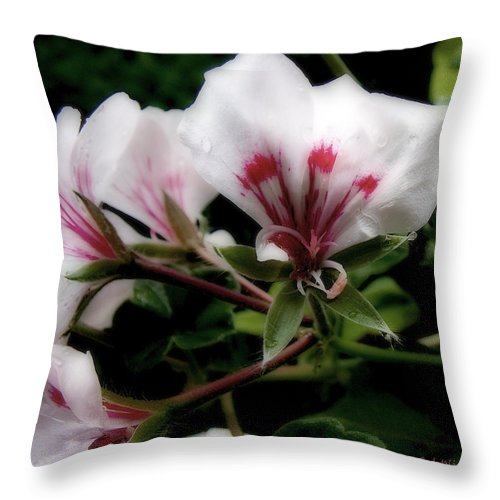 Cherry Throw Pillow featuring the photograph Bejewelled by RC DeWinter