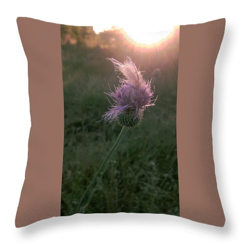 Thistle Throw Pillow featuring the photograph Belles Flower by Martin Shaw