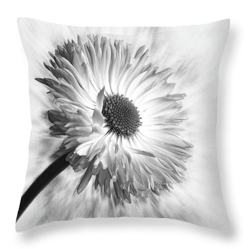 Beautiful Throw Pillow featuring the photograph Bellis In Mono  #flower #flowers by John Edwards