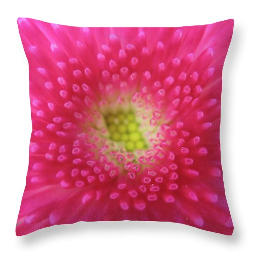 Wildflower Throw Pillow featuring the photograph Bellis Perennis by Valerie Anne Kelly