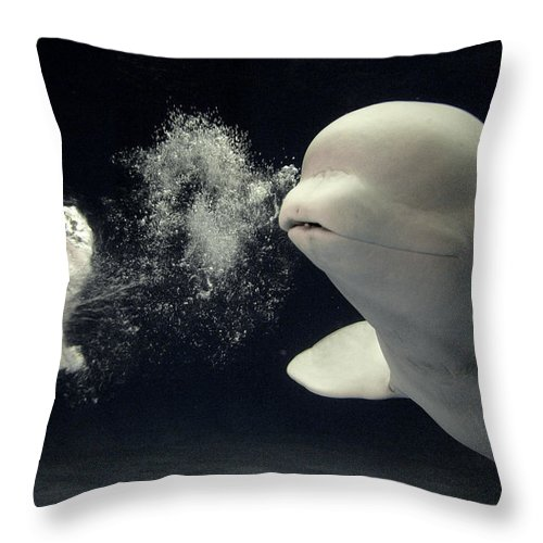 Mp Throw Pillow featuring the photograph Beluga Delphinapterus Leucas Whale by Hiroya Minakuchi