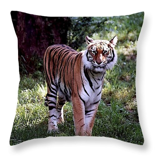 Animals Throw Pillow featuring the photograph Bengal Tiger by Jan Amiss Photography