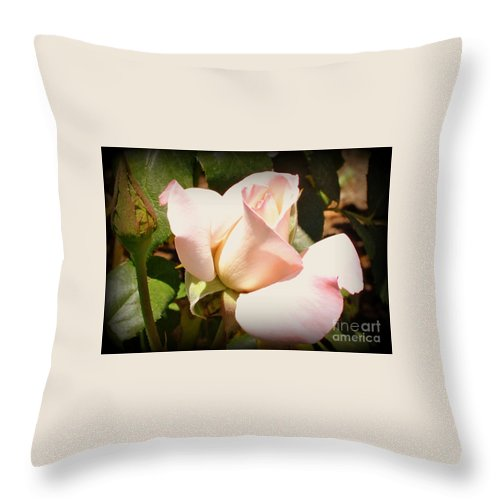 Roses Throw Pillow featuring the photograph Benicia Pink 2 by Pam Schmitt