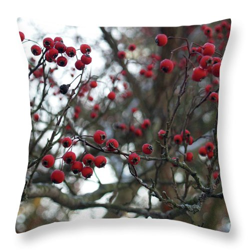 Red Throw Pillow featuring the photograph Berries by Andrea Lynch