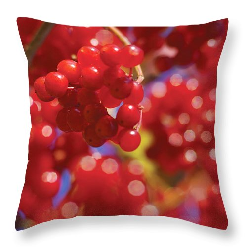 Red Throw Pillow featuring the photograph Berry Berry Red-2 by Steve Somerville