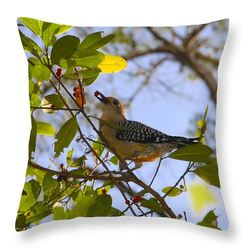 Woodpecker.red Belled Woodpecker Throw Pillow featuring the photograph Berry Good Woodpecker by David Lee Thompson