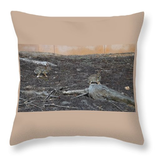Nature Throw Pillow featuring the photograph Best Friends by Keegan Hall