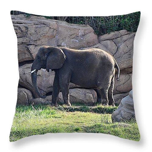 Animals Throw Pillow featuring the photograph Between A Rock And A Hard Place by Jan Amiss Photography