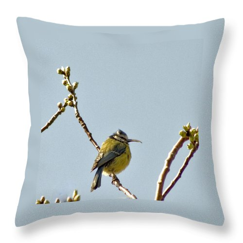 Tit Throw Pillow featuring the photograph Big Beak by Alan Pickersgill