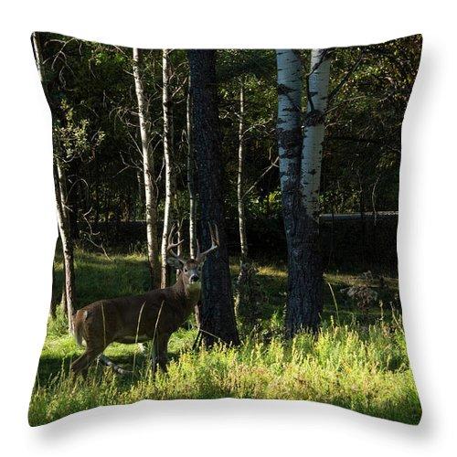 Deer Throw Pillow featuring the photograph Big Buck by Roy Nierdieck