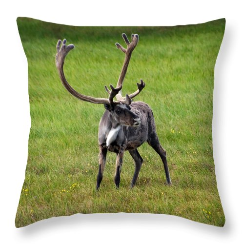 Caribou Throw Pillow featuring the photograph Big Horn by Anthony Jones