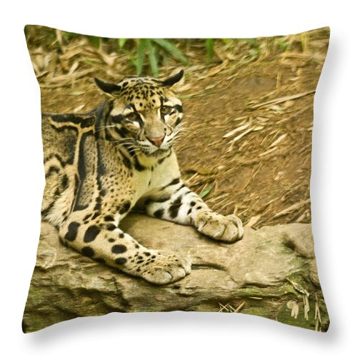 Cat Throw Pillow featuring the photograph Big Kitty Cat by Douglas Barnett