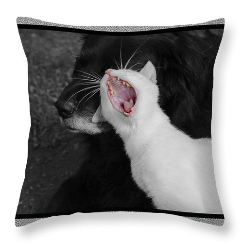 Cat Throw Pillow featuring the photograph Big Mouth Pete by Andrea Swiedler