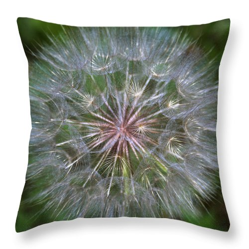 Dandelion Throw Pillow featuring the photograph Big Wish by Linda Sannuti