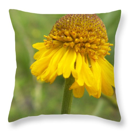 Flower Throw Pillow featuring the photograph Bigelow by Amy Fose