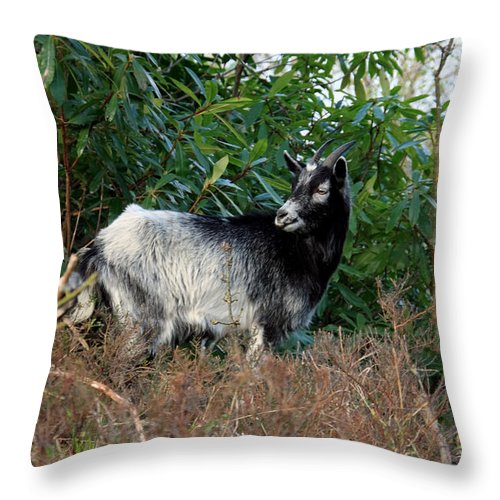 Goat Throw Pillow featuring the photograph Kerry Mountain Goat by Aidan Moran