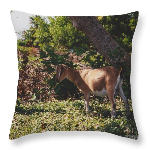 Art Throw Pillow featuring the photograph Billy Goat by Michelle Powell