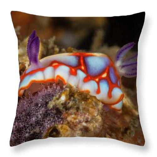 Chromodoris Throw Pillow featuring the photograph Binza by Sandra Edwards