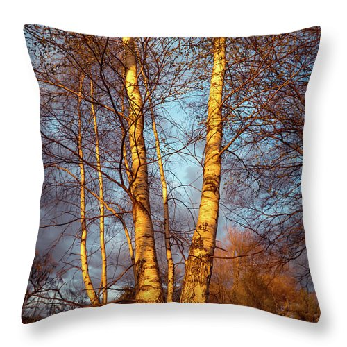 Birch Throw Pillow featuring the photograph Birch Tree In Golden Hour by Lilia D